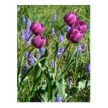 Flowing Purple Buds Postcard