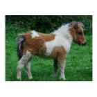 Fluffy Adorable Dartmoor Pony Postcard