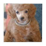 Fluffy Apricot Poodle Puppy Dog Ceramic Tile