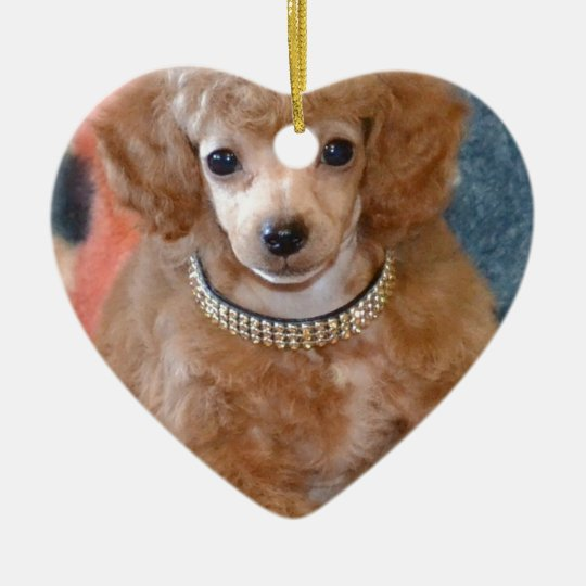 Fluffy Apricot Poodle Puppy Dog Christmas Ornament ...
