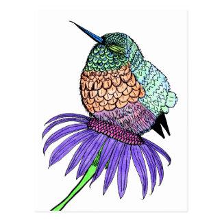 Fluffy Baby Hummingbird Postcard