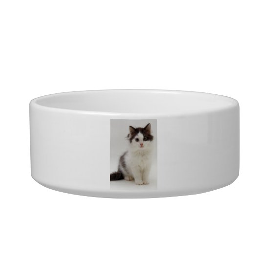 Fluffy Black and White Kitten Cat Pet Bowl