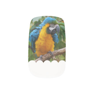 Fluffy Blue and Gold Macaw Minx ® Nail Wraps