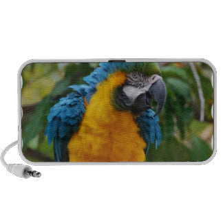 Fluffy Blue and Gold Macaw Mini Speaker