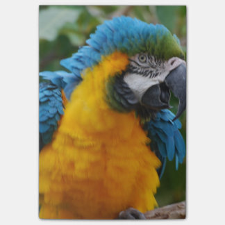 Fluffy Blue and Gold Macaw Post-it® Notes