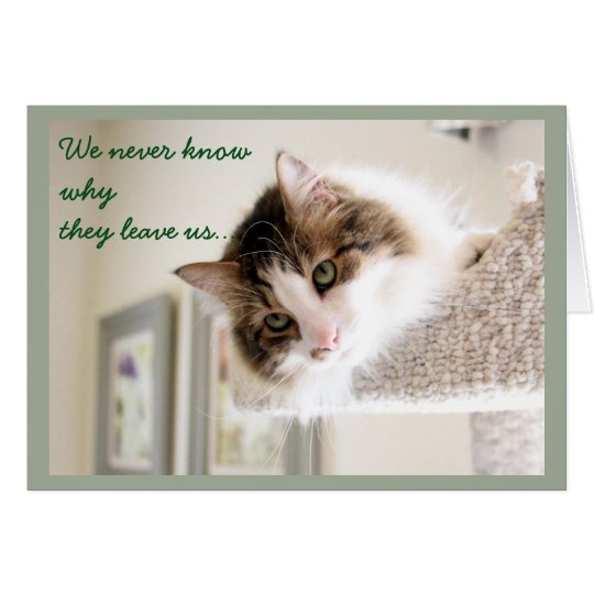 Fluffy Cat Face Sympathy Card