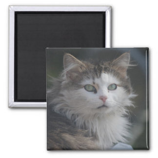 Fluffy cat square magnet