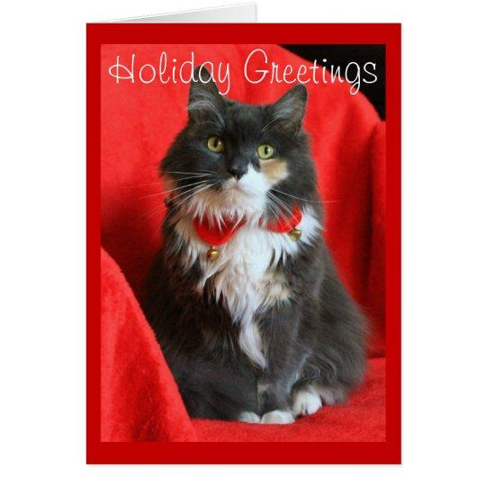 Fluffy Cat Wearing Christmas Collar - Card
