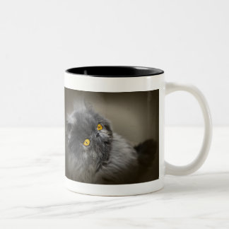 Fluffy Dark Cat with Orange Eyes Two-Tone Coffee Mug