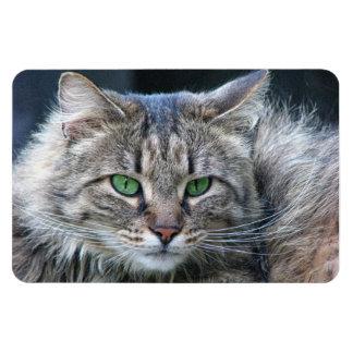 Fluffy Green-Eyed Tiger Kitty Cat Rectangular Photo Magnet