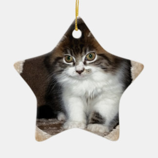 Fluffy Kitten Ceramic Star Decoration