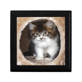 Fluffy Kitten Gift Box
