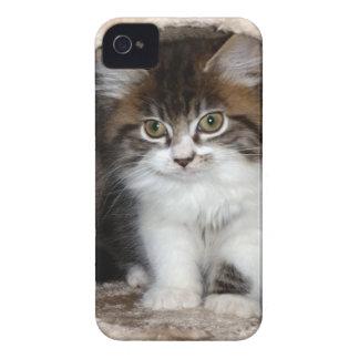 Fluffy Kitten iPhone 4 Cases