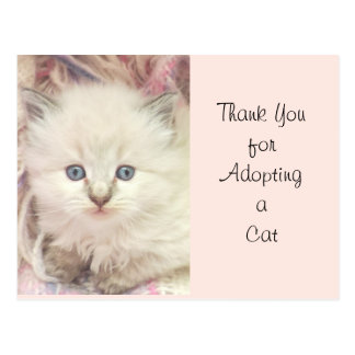 Fluffy Kitten Love Blue Eyes Photo Design Postcard