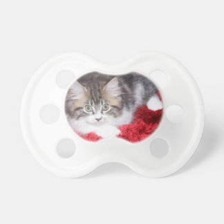 fluffy-kitten-on-red-rug baby pacifiers