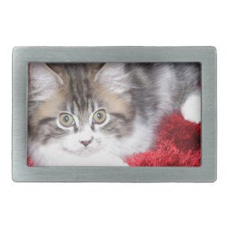 fluffy-kitten-on-red-rug belt buckle