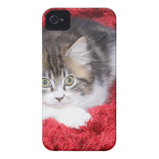 fluffy-kitten-on-red-rug Case-Mate iPhone 4 case