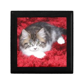 fluffy-kitten-on-red-rug gift box