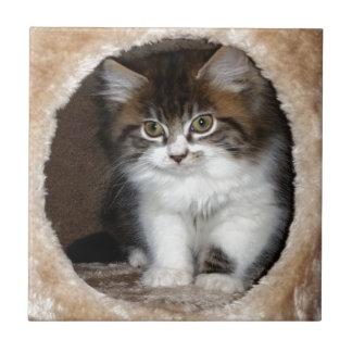 Fluffy Kitten Tile