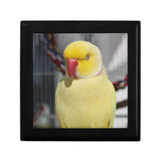 Fluffy Lutino Indian Ringneck Parakeet Small Square Gift Box