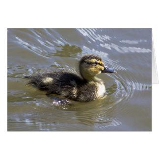 Fluffy Mallard Chick Card