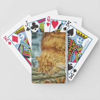 Fluffy Orange Manly Cat Poker Deck