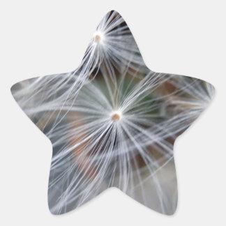 Fluffy (Parachute) Dandelion Seeds Star Sticker