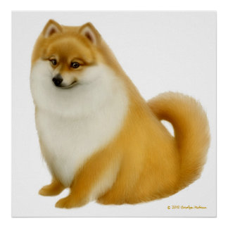 Fluffy Pomeranian Dog Print