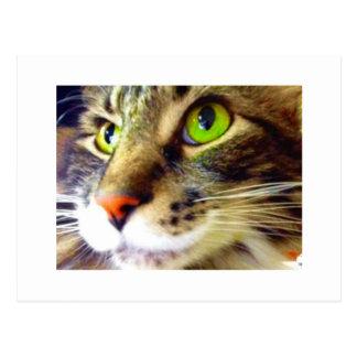 """Fluffy Says Hi"" Cute Cat Postcard"