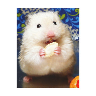Fluffy syrian hamster Kokolinka eating a seed Canvas Print