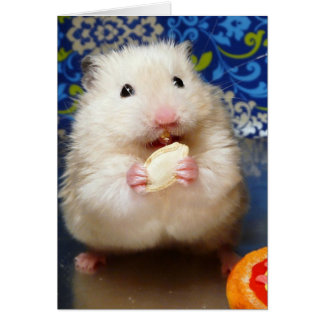Fluffy syrian hamster Kokolinka eating a seed Card