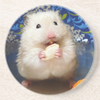 Fluffy syrian hamster Kokolinka eating a seed Coaster