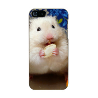 Fluffy syrian hamster Kokolinka eating a seed Incipio Feather® Shine iPhone 5 Case