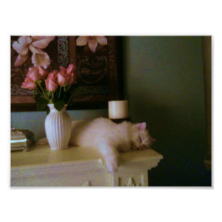 Fluffy white cat sleeps on the mantle Poster