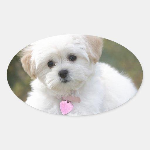 Fluffy White Dog Oval Sticker