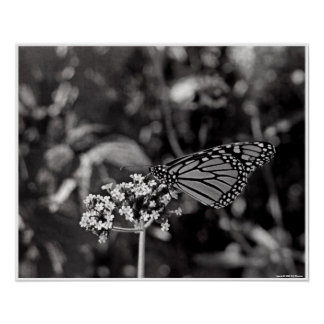 Flutterby Print