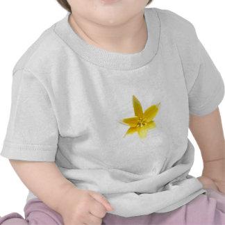 flwrs 030 tee shirts