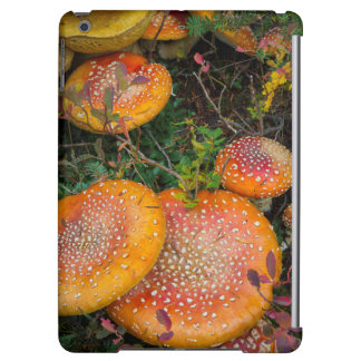 Fly agaric mushrooms at Mowich Lake