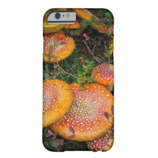 Fly agaric mushrooms at Mowich Lake Barely There iPhone 6 Case