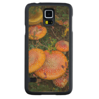Fly agaric mushrooms at Mowich Lake Carved Maple Galaxy S5 Case