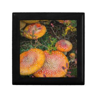 Fly agaric mushrooms at Mowich Lake Gift Box