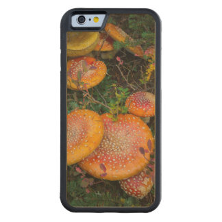 Fly agaric mushrooms at Mowich Lake Maple iPhone 6 Bumper Case