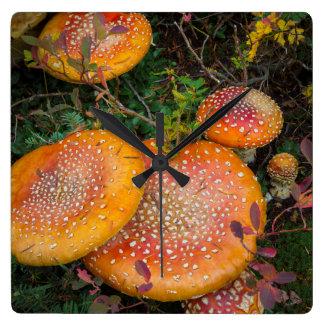 Fly agaric mushrooms at Mowich Lake Square Wall Clock