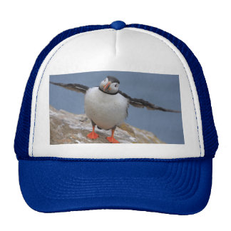 Fly Away Puffin Hat