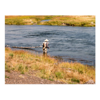 Fly Fisherman Postcard