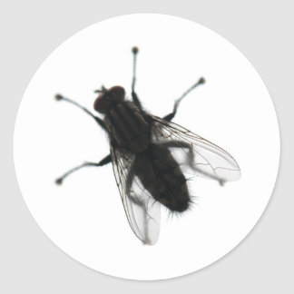 Fly insect sticker