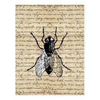 Fly on a vintage background postcard