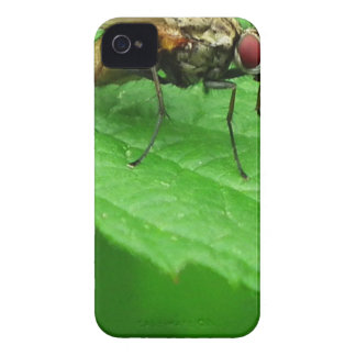 Fly on Leaf iPhone 4 Cases