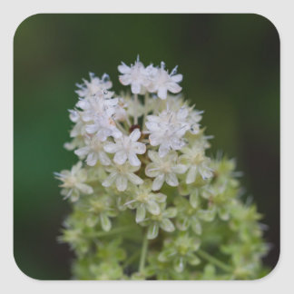 Fly Poison White Wildflower Floral Square Stickers