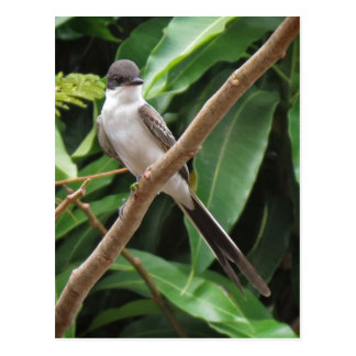 Flycatcher Bird Postcard